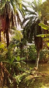 djungelbok