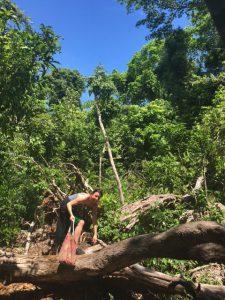 Sacred Kaya Forest