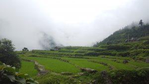 Risfälten stod gröna på 2500 m ö.h.