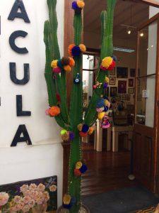 Fina kaktusar överallt